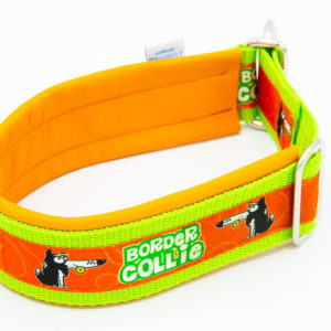 Hundehalsband Border Collie